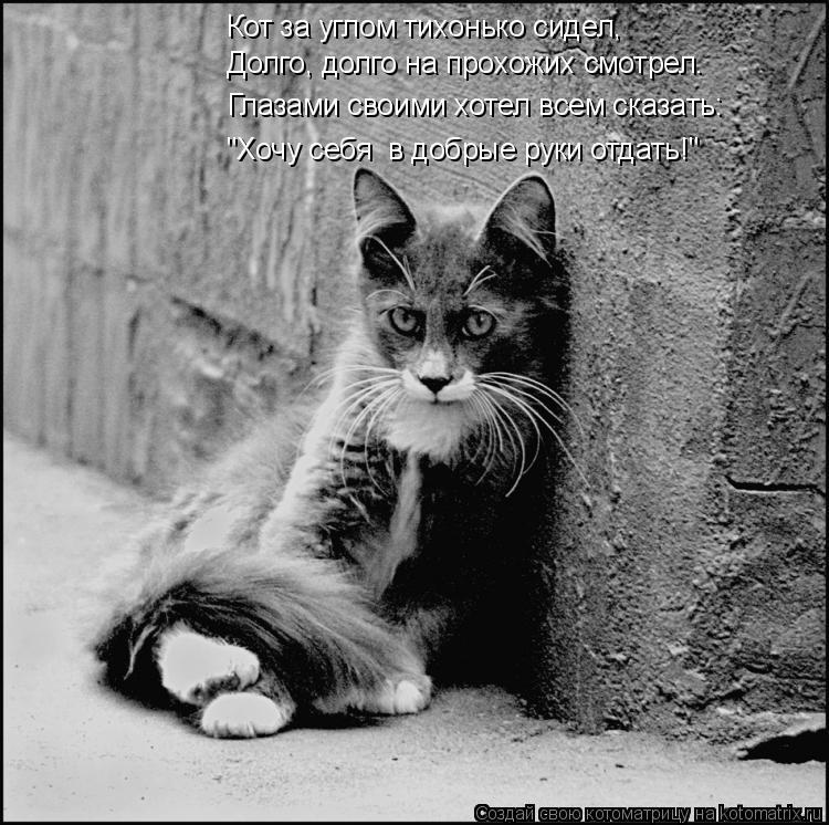 """Котоматрица: Кот за углом тихонько сидел, """"Хочу себя  в добрые руки отдать!"""" Долго, долго на прохожих смотрел. Глазами своими хотел всем сказать:"""
