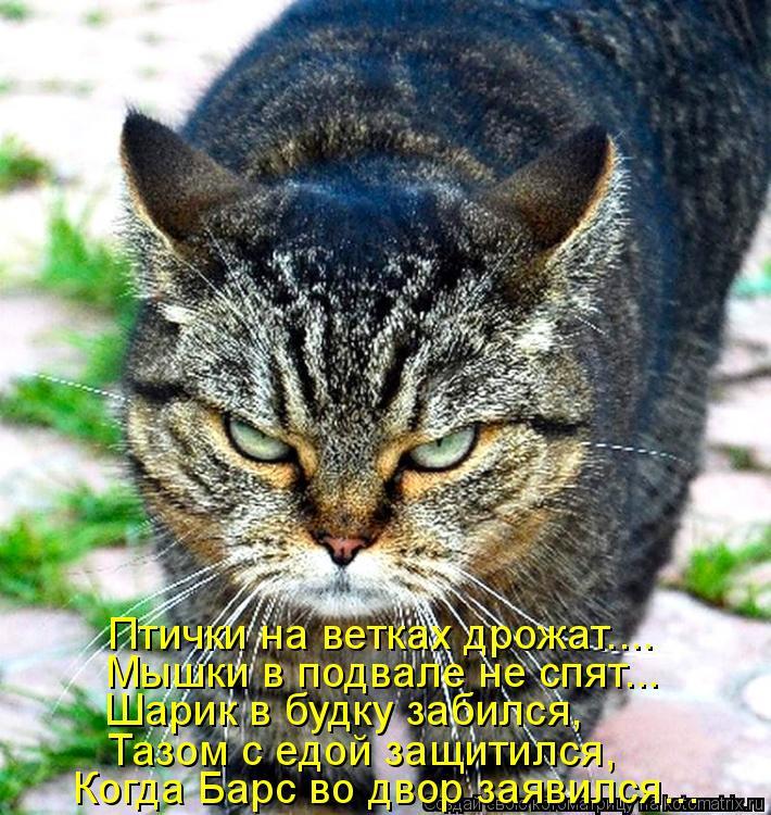 Котоматрица: Птички на ветках дрожат.... Когда Барс во двор заявился... Мышки в подвале не спят... Шарик в будку забился, Тазом с едой защитился,