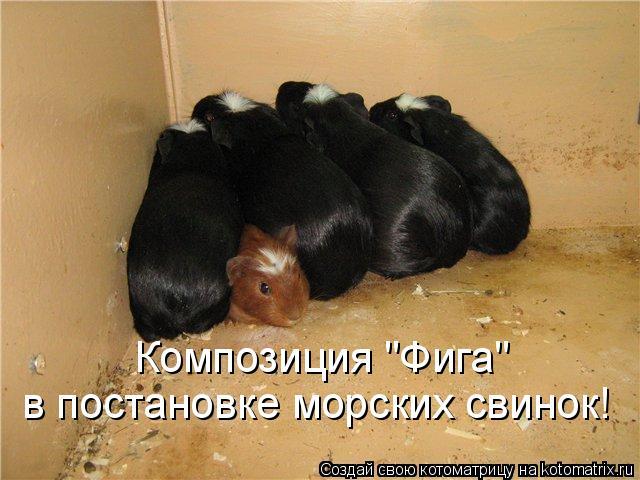 "Котоматрица: Композиция ""Фига""  в постановке морских свинок!"