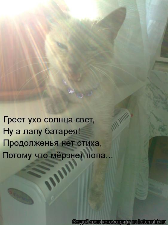 Котоматрица: Греет ухо солнца свет, Ну а лапу батарея! Продолженья нет стиха, Потому что мёрзнет попа...