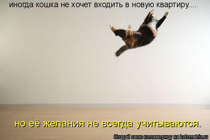 Котоматрица: иногда кошка не хочет входить в новую квартиру.... но её желания не всегда учитываются.