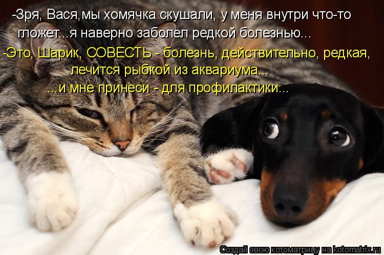 Котоматрица - -Зря, Вася,мы хомячка скушали, у меня внутри что-то гложет...я наверно