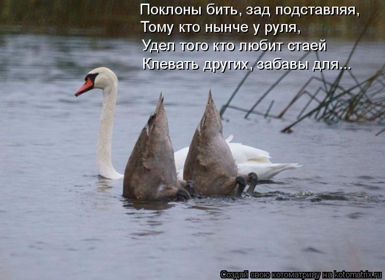 Котоматрица: Поклоны бить, зад подставляя, Тому кто нынче у руля, Удел того кто любит стаей Клевать других, забавы для...