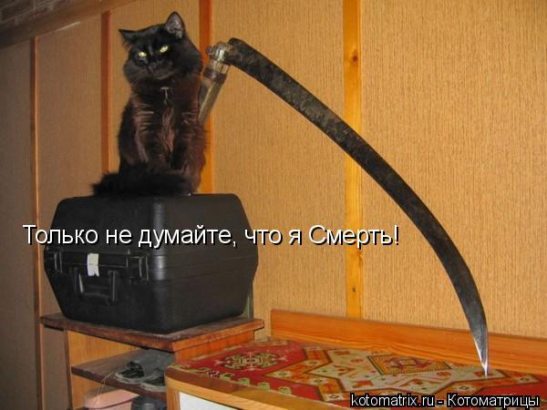 Котоматрица: Только не думайте, что я Смерть!