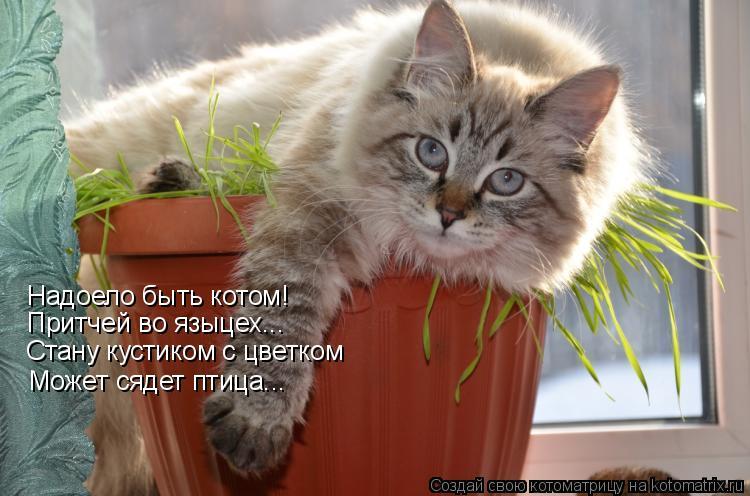 Котоматрица: Надоело быть котом! Притчей во языцех... Стану кустиком с цветком Может сядет птица...