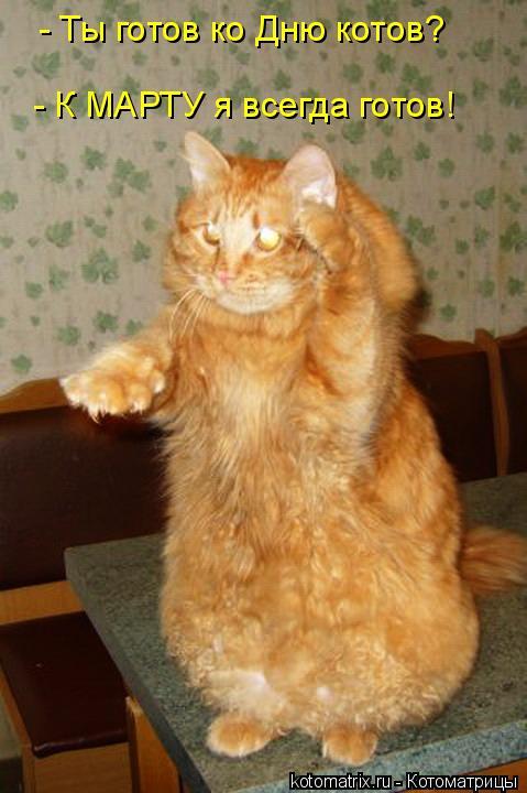 Котоматрица: - Ты готов ко Дню котов? - К МАРТУ я всегда готов!