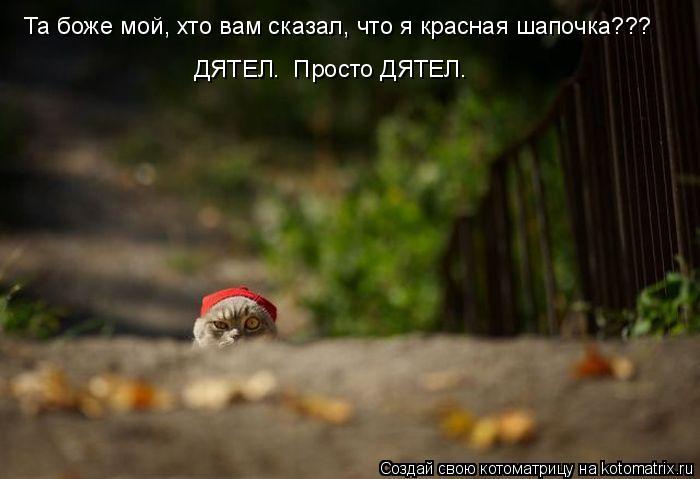 Котоматрица: Та боже мой, хто вам сказал, что я красная шапочка??? ДЯТЕЛ.  Просто ДЯТЕЛ.