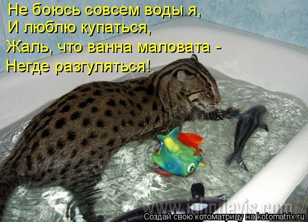 Котоматрица: Не боюсь совсем воды я, И люблю купаться, Жаль, что ванна маловата - Негде разгуляться!