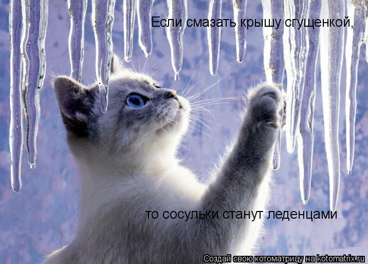 Котоматрица: Если смазать крышу сгущенкой, то сосульки станут леденцами