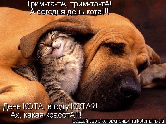 Котоматрица: Трим-та-тА, трим-та-тА! А сегодня день кота!!! День КОТА, в году КОТА?! Ах, какая красотА!!!