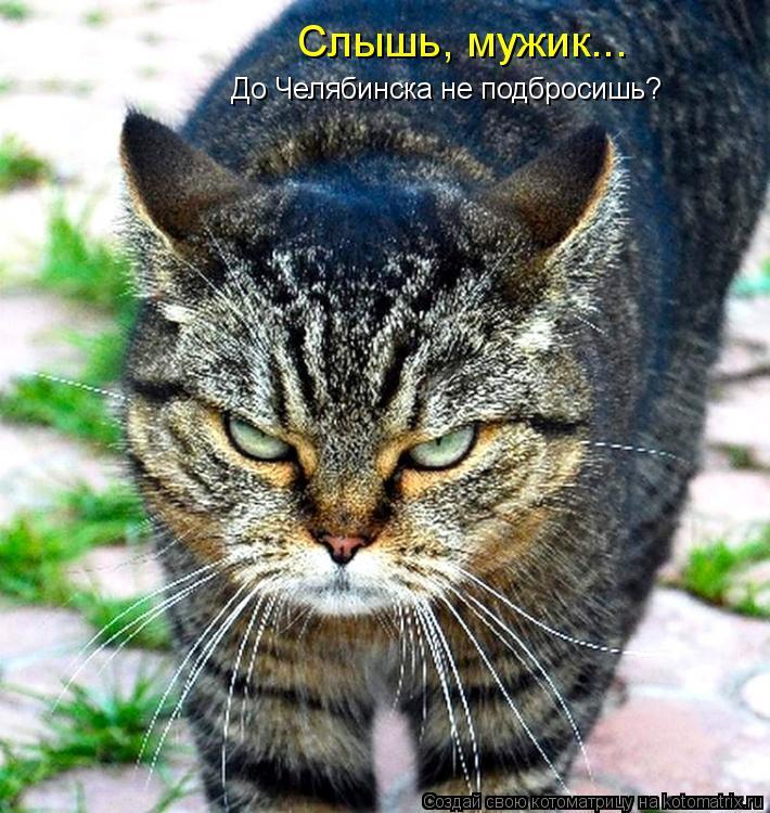 Котоматрица: Слышь, мужик... До Челябинска не подбросишь?