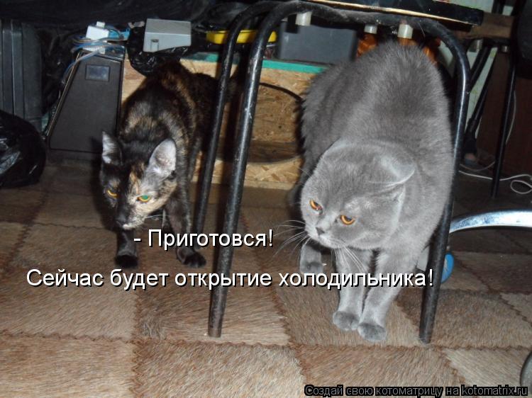 Котоматрица: - Приготовся!  Сейчас будет открытие холодильника!