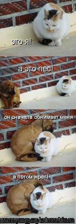 Котоматрица: это я! а это пёс! он сначала обнимает меня а потом жрёт!