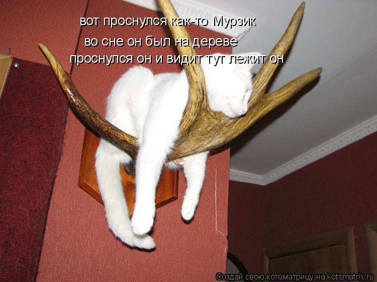 Котоматрица: вот проснулся как-то Мурзик во сне он был на дереве проснулся он и видит тут лежит он