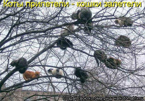 Котоматрица: Коты прилетели - кошки залетели