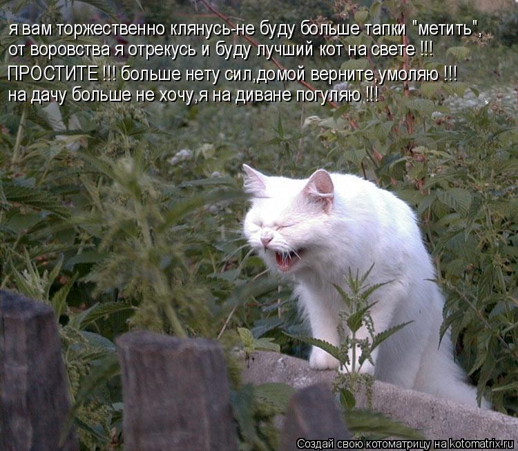 """Котоматрица: я вам торжественно клянусь-не буду больше тапки """"метить"""", от воровства я отрекусь и буду лучший кот на свете !!! ПРОСТИТЕ !!! больше нету сил,до"""