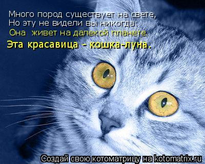 Котоматрица: Много пород существует на свете, Но эту не видели вы никогда: Она  живет на далекой планете.  Эта красавица - кошка-луна.