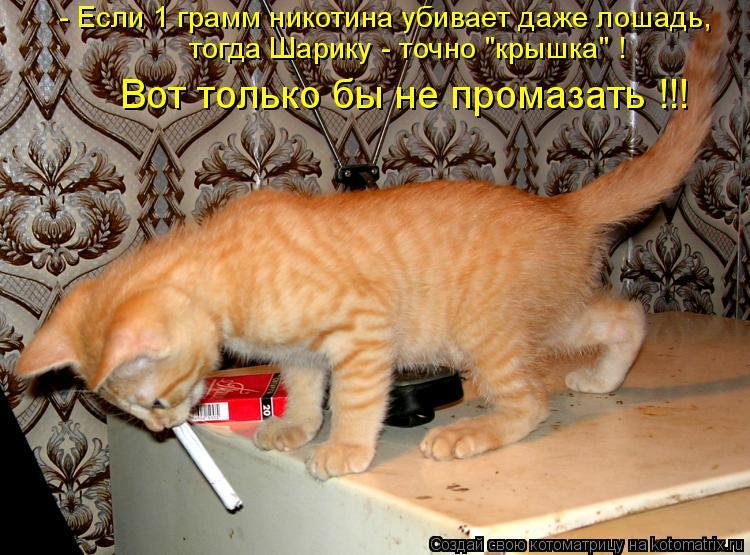 Котоматрица - - Если 1 грамм никотина убивает даже лошадь, тогда Шарику - точно