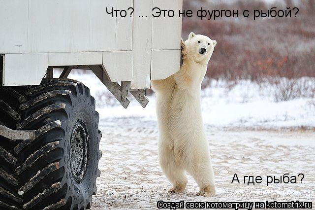 Котоматрица: Что? ... Это не фургон с рыбой? А где рыба?