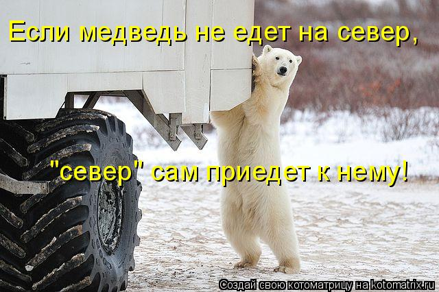 """Котоматрица: Если медведь не едет на север, """"север"""" сам приедет к нему!"""