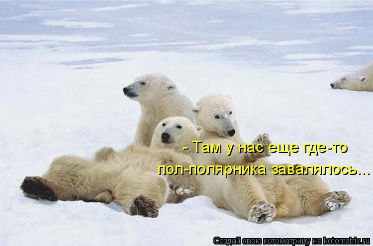 - Там у нас еще где-то пол-полярника завалялось...