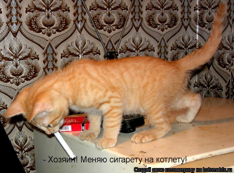 Котоматрица: - Хозяин! Меняю сигарету на котлету!