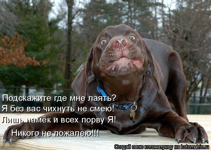 Котоматрица: Подскажите где мне лаять? Я без вас чихнуть не смею! Лишь намёк и всех порву Я! Никого не пожалею!!!