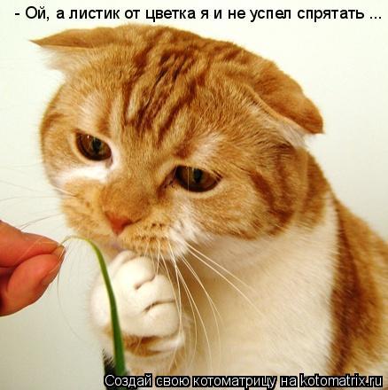 Котоматрица: - Ой, а листик от цветка я и не успел спрятать ...