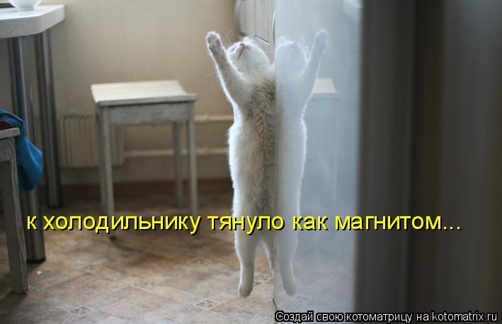 Котоматрица: к холодильнику тянуло как магнитом...