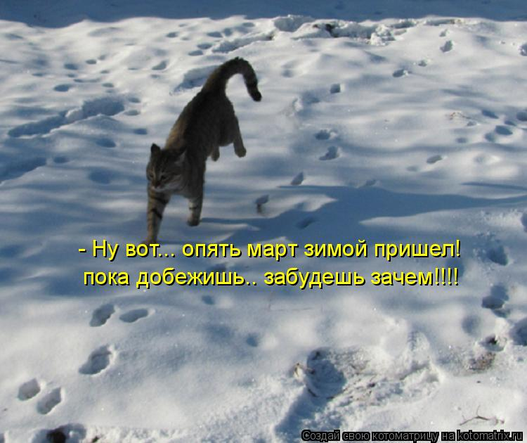Котоматрица: - Ну вот... опять март зимой пришел! пока добежишь.. забудешь зачем!!!!