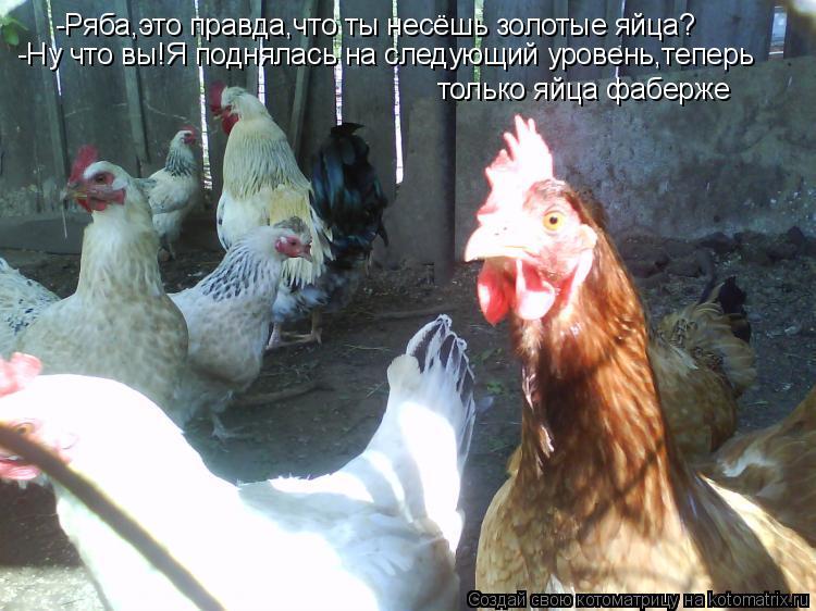 Котоматрица: -Ряба,это правда,что ты несёшь золотые яйца? -Ну что вы!Я поднялась на следующий уровень,теперь только яйца фаберже