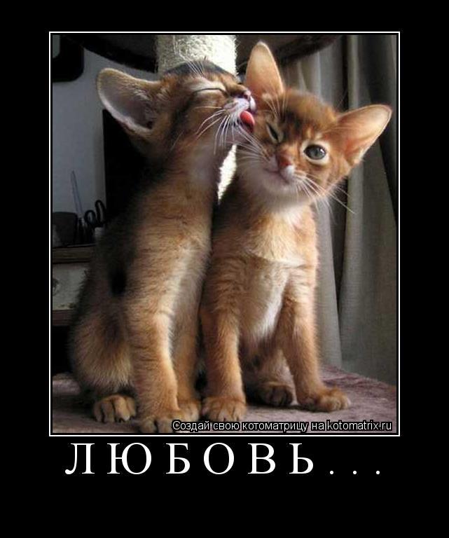 Котоматрица: любовь...