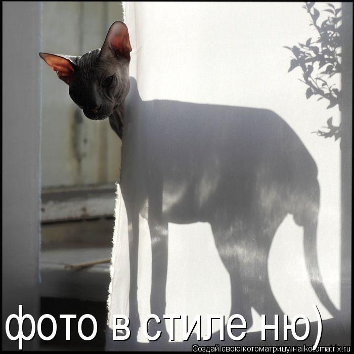 Котоматрица: фото в стиле ню)