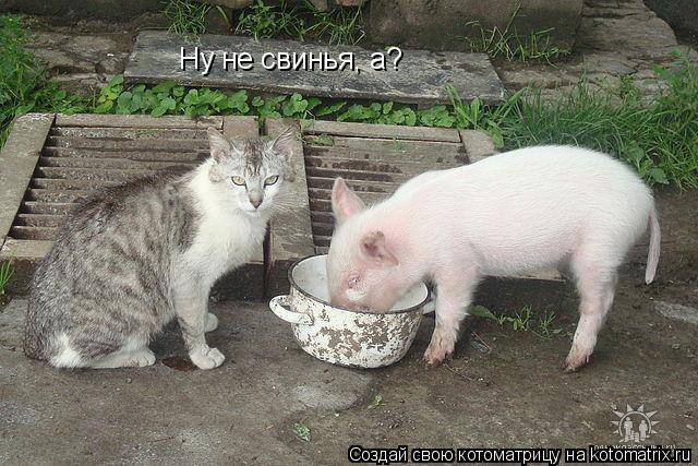 Котоматрица: Ну не свинья, а?