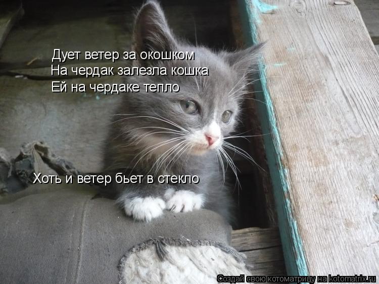 Котоматрица: Дует ветер за окошком Дует ветер за окошком На чердак залезла кошка Ей на чердаке тепло Хоть и ветер бьет в стекло