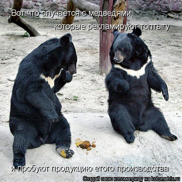 Котоматрица: Вот что случается с медведями,  которые рекламируют топтыгу и пробуют продукцию етого производства