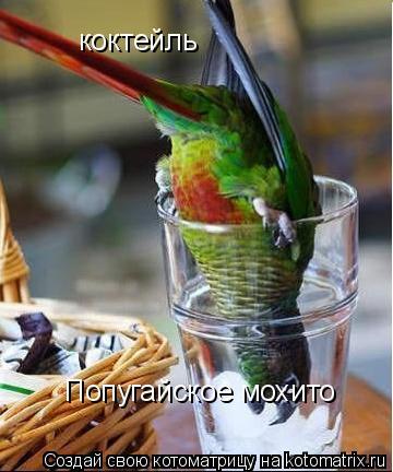 Котоматрица: коктейль Попугайское мохито