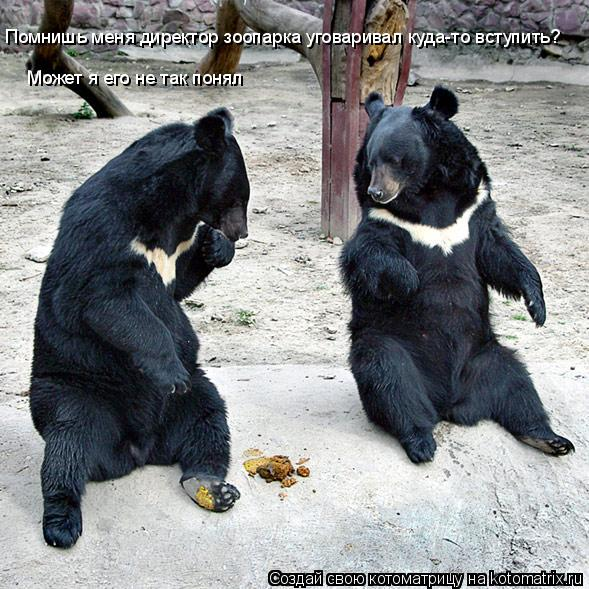 Котоматрица: Помнишь меня директор зоопарка уговаривал куда-то вступить? Может я его не так понял