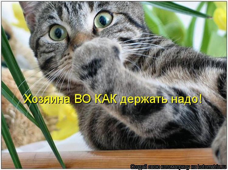 Котоматрица: Хозяина ВО КАК держать надо!