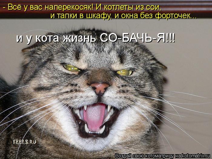 Котоматрица: - Всё у вас наперекосяк! И котлеты из сои, и тапки в шкафу, и окна без форточек... и у кота жизнь СО-БАЧЬ-Я!!!