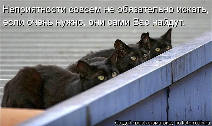 Котоматрица: Неприятности совсем не обязательно искать, если очень нужно, они сами Вас найдут.