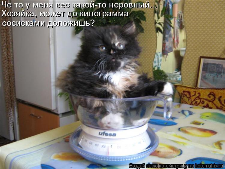 Котоматрица: Хозяйка, может до килограмма  сосисками доложишь? Че то у меня вес какой-то неровный...