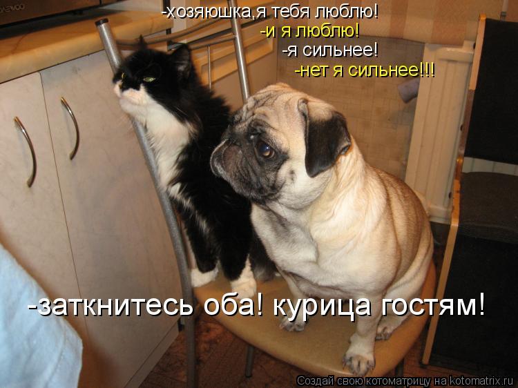 Котоматрица: -хозяюшка,я тебя люблю! -и я люблю! -я сильнее! -нет я сильнее!!! -заткнитесь оба! курица гостям!