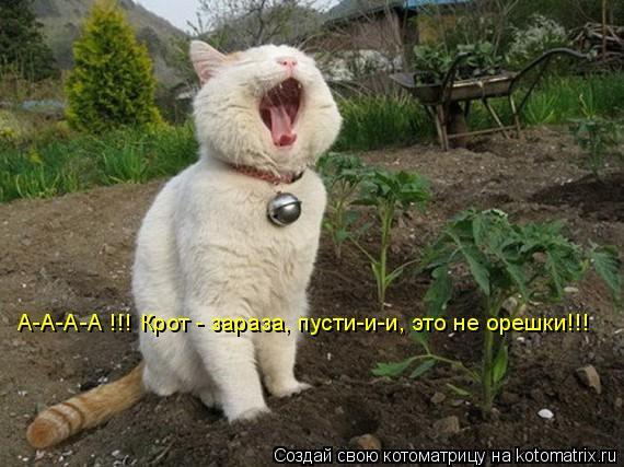 Котоматрица: А-А-А-А !!! Крот - зараза, пусти-и-и, это не орешки!!!