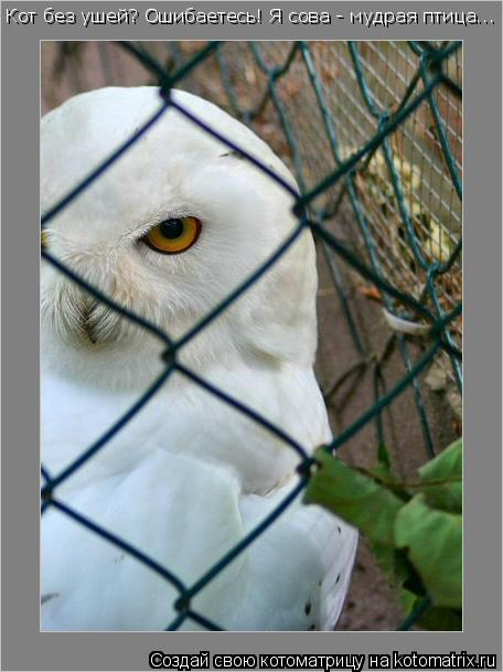 Котоматрица: Кот без ушей? Ошибаетесь! Я сова - мудрая птица...