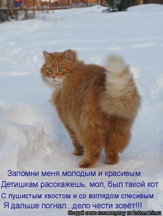 Котоматрица: Запомни меня молодым и красивым Детишкам расскажешь, мол, был такой кот С пушистым хвостом и со взглядом спесивым Я дальше погнал...дело чес