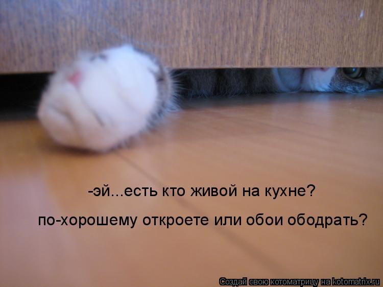 Котоматрица - -эй...есть кто живой на кухне? по-хорошему откроете или обои ободрать?
