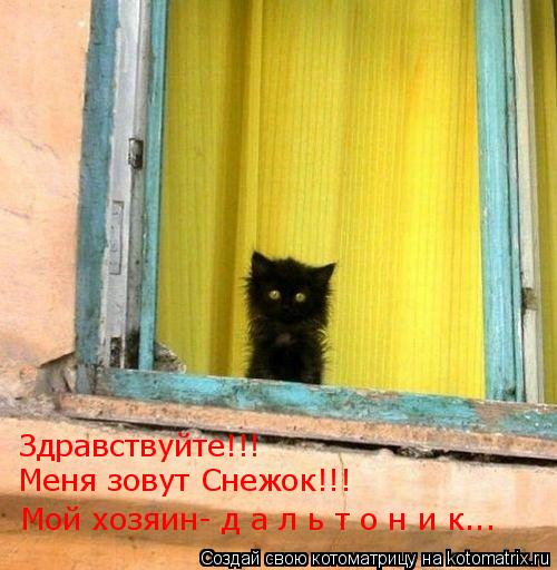 Котоматрица: Здравствуйте!!!  Мой хозяин- д а л ь т о н и к... Меня зовут Снежок!!!
