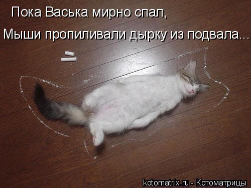 Котоматрица: Пока Васька мирно спал, Мыши пропиливали дырку из подвала...