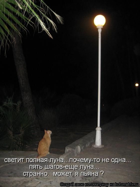 Котоматрица: светит полная луна...почему-то не одна... пять шагов-еще луна... странно.  может, я пьяна ?